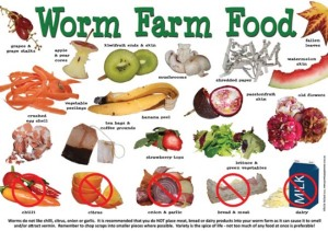 worm food poster